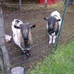 «Farm to Farm» dans les Coteaux du Lyonnais