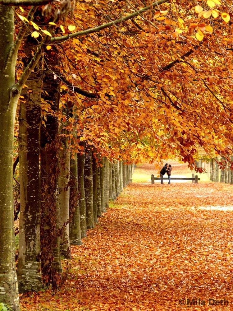 amoureux-d-automne