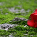 5 jardins lyonnais cachés et méconnus à Lyon