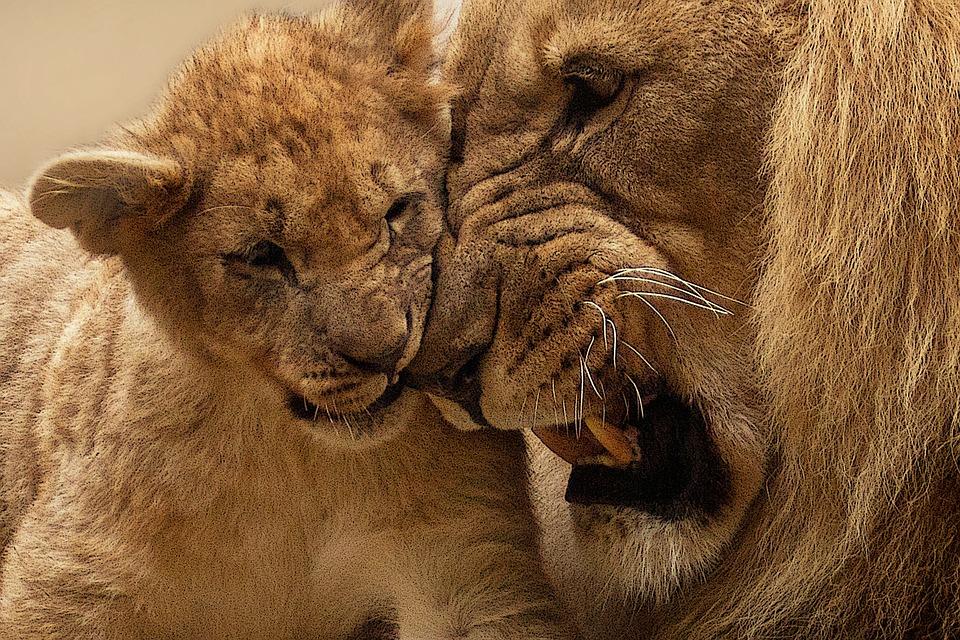 lion-565818_960_720