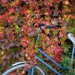 La Voie Verte du Beaujolais, une belle voie cyclable à 30 minutes de Lyon !